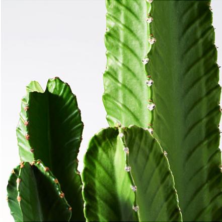 konstgjorda växter ikea